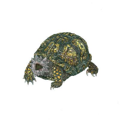 Nicholas Di Genova, 'Hell Turtle', 2015