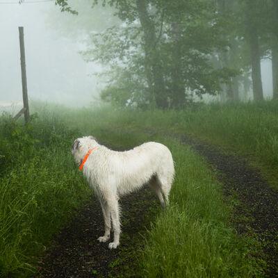 Cig Harvey, 'Wolfhound, Hope, Maine', 2012
