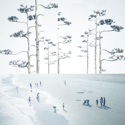 Mark Bartkiw, 'Sanctuary - manipulated, abstract, beach, forest, photograph on dibond', 2019