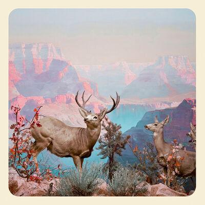 Jim Naughten, 'The Deer', 2017