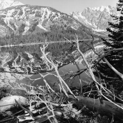 Lee Friedlander, 'Grand Teton National Park, Wyoming', 1999