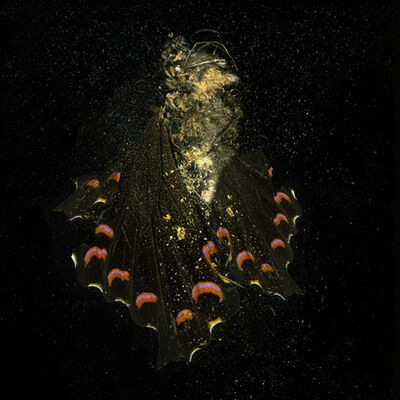 """Mat Collishaw, '""""Insecticide"""" (N° 28)', 2012"""