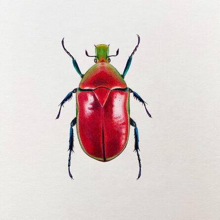 Hannah Hanlon, 'Coleoptera Chroma #5', 2020