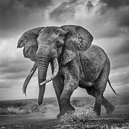 Michel Ghatan, 'Elephant on the Run', Tawi, Kenya, 2019