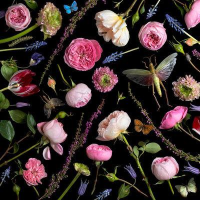 Paulette Tavormina, 'Botanical VI (Juliet Roses)', 2013