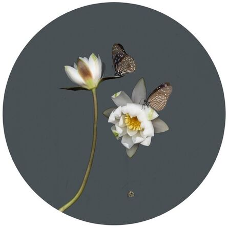 Sandra Kantanen, 'Butterfly 1 (glassy tiger)', 2015