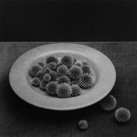 Robert Mapplethorpe, 'Pods', 1985