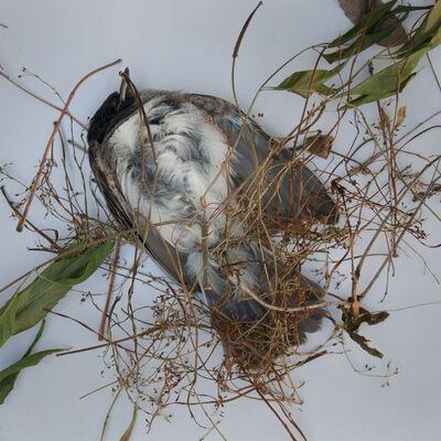 Hiroshi Watanabe, 'TDTDC 24 (Dead Bird)', 2011