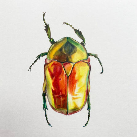 Hannah Hanlon, 'Coleoptera Chroma #25', 2020