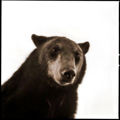 Nine Francois, 'Black Bear II', 2017