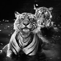 David Yarrow, 'Jungle book stories', 2013