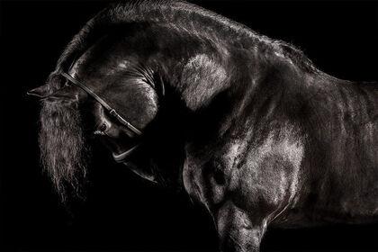Afresco by Raphael Macek   Equestrian Photography