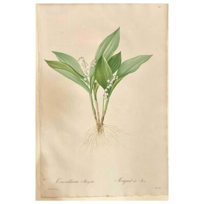 Pierre Joseph Redouté, 'Convallaria Majalis Print Hand Colored Engraving Signed P.J. Redoute', 1800