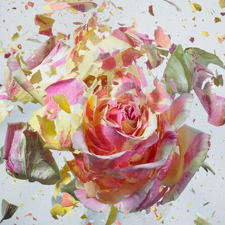Martin Klimas, '(Untitled) Exploding Flower', 2012