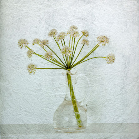 Helen Sear, 'Pastoral Monument 5, Angelica Atropurpurea', 2012