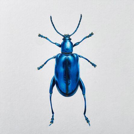 Hannah Hanlon, 'Coleoptera Chroma #28', 2020