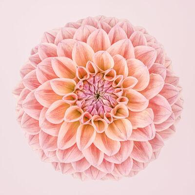 Paul Coghlin, 'Pink Dahlia Circle I ', 2015