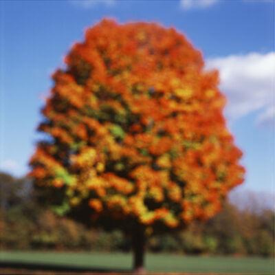 John Huggins, 'Tree, Illinois', 2014