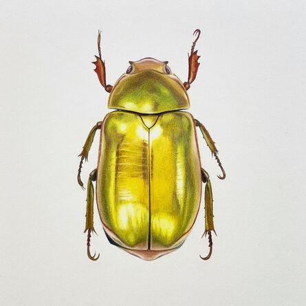 Hannah Hanlon, 'Coleoptera Chroma #27', 2020