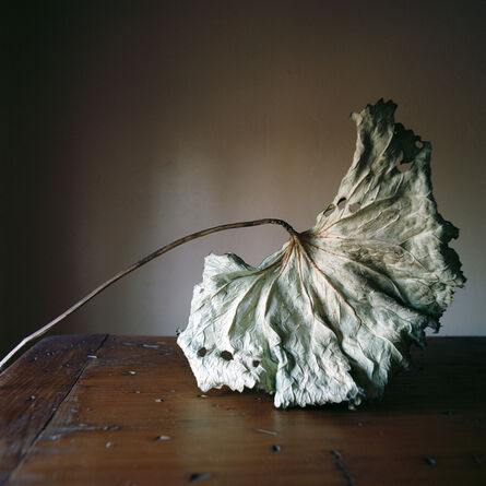 Wendy Burton, 'Botanical No. 23', 2013