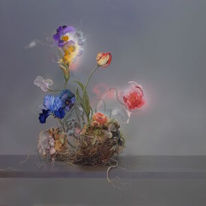 Matthew McConville, 'Improved Iris', 2020
