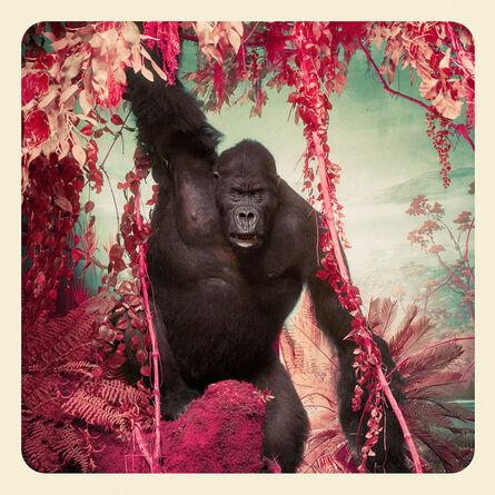 Jim Naughten, 'The Gorilla', 2017