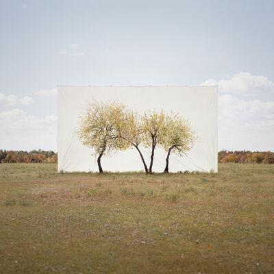 Myungho Lee, 'Tree...#4', 2013
