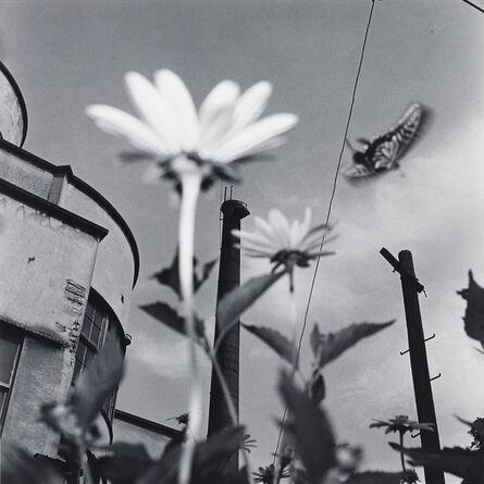 Issei Suda, 'Koshikawa Botanical Gardens, Bunkyo-ku, 1982'