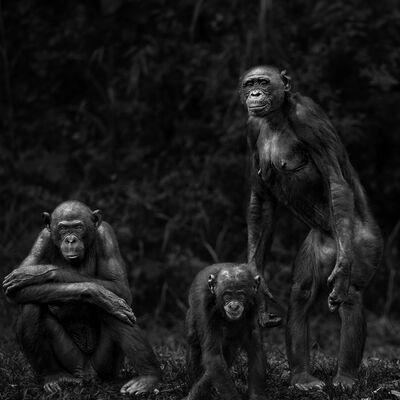 Isabel Muñoz, 'Primates Series', 2015