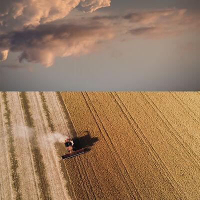 Mark Bartkiw, 'Harvest', 2020