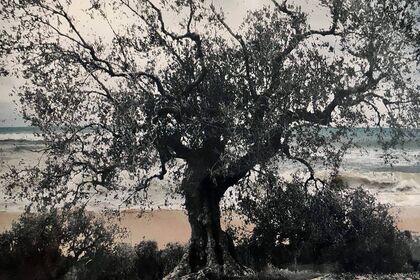 L'éternité, un arbre