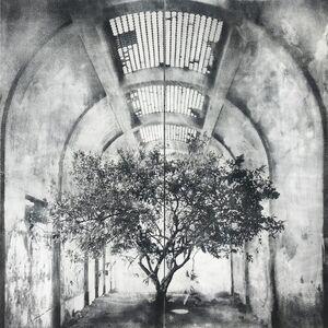 Tomás Ochoa, 'Lemon Tree', 2019