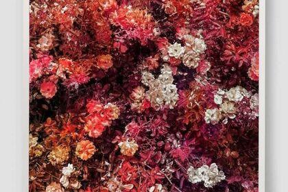 Trevor Paglen: A Thousand Flowers
