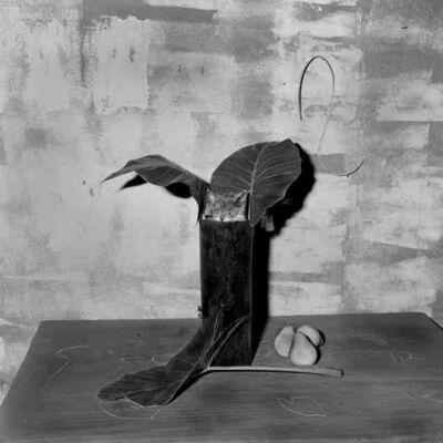 Roger Ballen, 'Cat In Pipe', 2003
