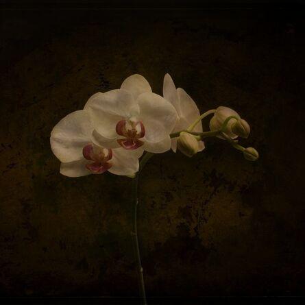 Jack Spencer, 'Orchid 1/20'