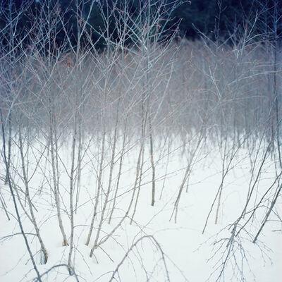 Debra Bloomfield, 'Wilderness 34717-10-08', 2014