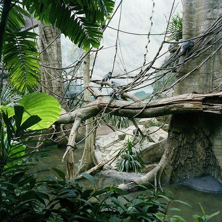 Lucinda Devlin, 'Monkey Jungle, Bronx Zoo, New York', 1987