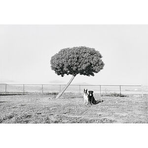 Henry Wessel, 'Pico and Tasha', 1987