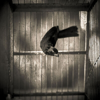 Keith Carter, 'Bird in Cage', 2017