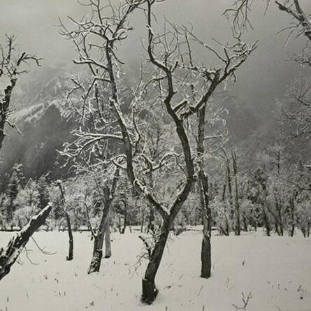 Ansel Adams, 'Trees in Snow, Yosemite National Park', 1960