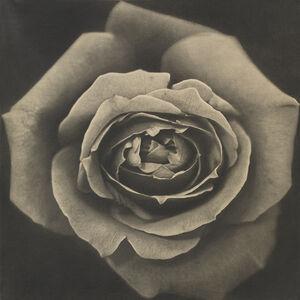 Kunié Sugiura, 'Rose', 1969