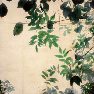 John Folsom, 'Canopy #16', 2012