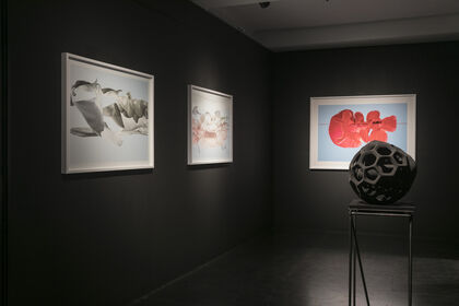 Harmony of Contrasts - Works by Sally Gall and Peter Simon Muhlhausser
