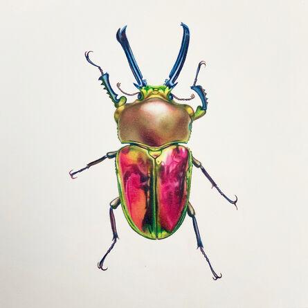 Hannah Hanlon, 'Coleoptera Chroma #24', 2020