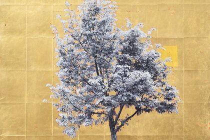 Gold Leaf Trees