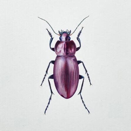 Hannah Hanlon, 'Coleoptera Chroma #9', 2020