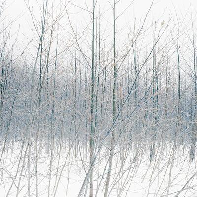 Debra Bloomfield, 'Wilderness 38055-7-08', 2008