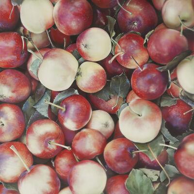 Ben Schonzeit, 'Lady Apples'
