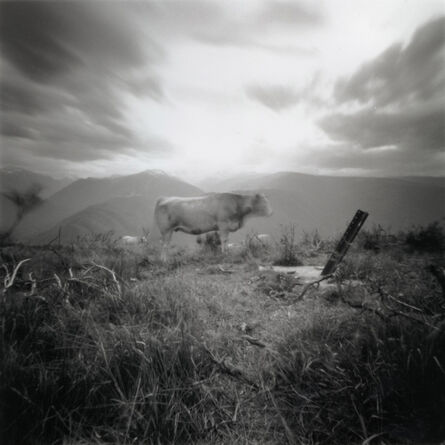 Dianne Bos, 'Vache (glorious Ariegeois)', 2007