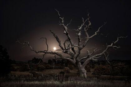 Jasper Goodall: Twilight's Path